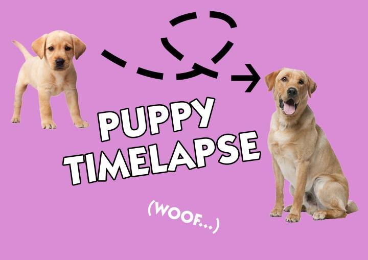 Puppy timelapse
